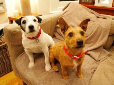 Pipe & Chili - Terrier x