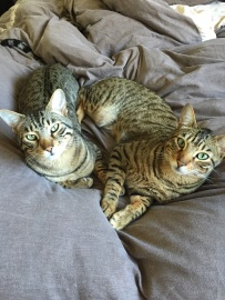 Farley & Dexter - Serengeti