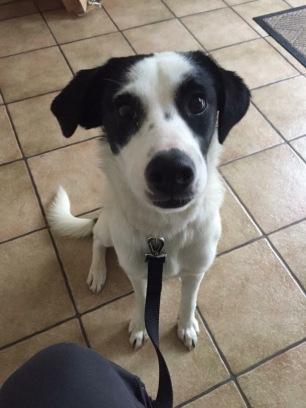 Panhandle - Spanish Street Dog