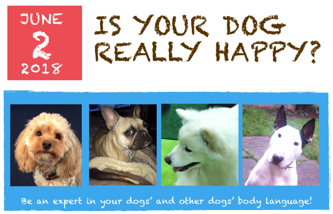 Is your dog really happy?