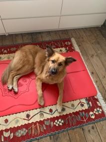 Redford - Turkish Street Dog
