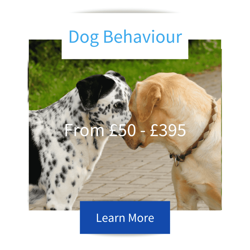 Dog Behaviour Tile with Dalmation and labrador cautiously interacting advertising Jo Hinds Dog Trainer and Behaviourist services with prices and learn more button.