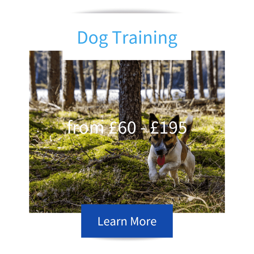 Dog Training Tile Puppy Training Tile with Jack Russell running through the woods advertising Jo Hinds Dog Trainer and Behaviourist services with prices and learn more button.Cocker Spaniel Puppy sitting in the woods on a harness and lead advertising Jo Hinds Dog Trainer and Behaviourist services with prices and learn more button.