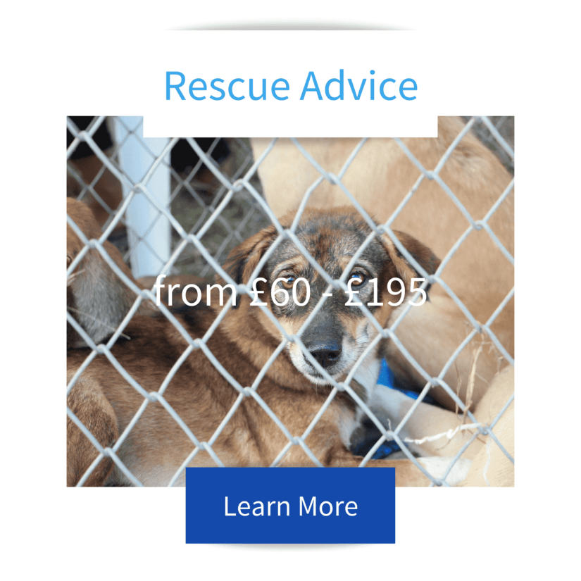 Rescue advice tile with dog lying down behind mesh fenceadvertising Jo Hinds Dog Trainer and Behaviourist services with prices and learn more button.
