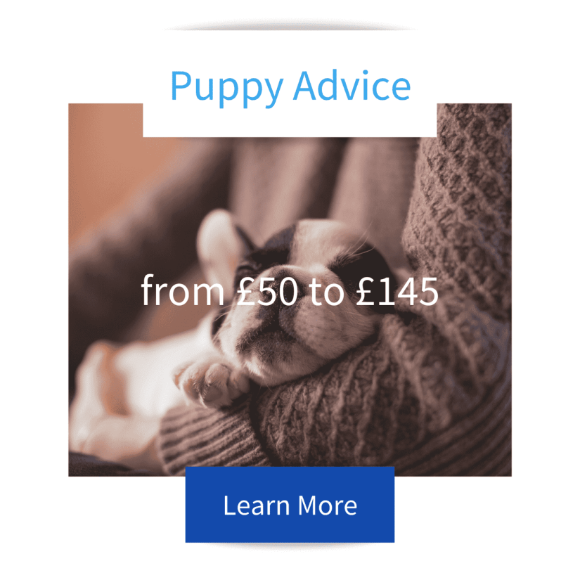 Sleeping puppy in arms of someone wearing a wooden jumper advertising Jo Hinds Dog Trainer and Behaviourists Puppy Advice Sessions and Prices