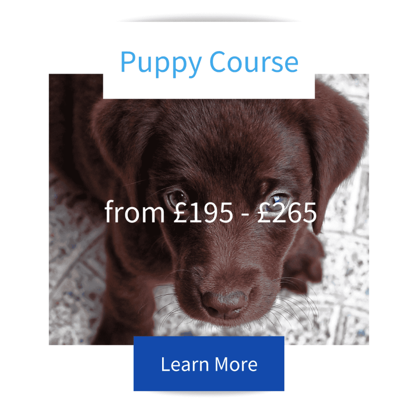 Brown labrador puppy looking up icon for Johinds Dog Trainer and Behaviourists Puppy Course