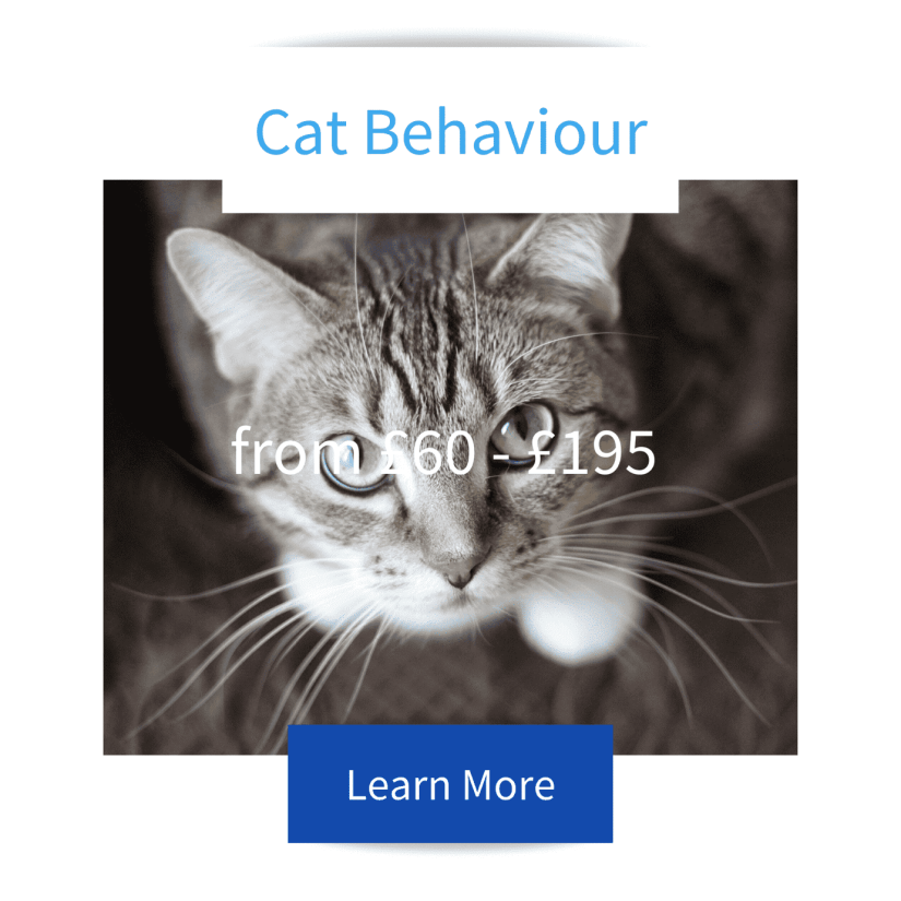 Cat Behaviour Title with tabby cat looking up in camera advertising Jo Hinds Dog Trainer and Behaviourist services with prices and learn more button.