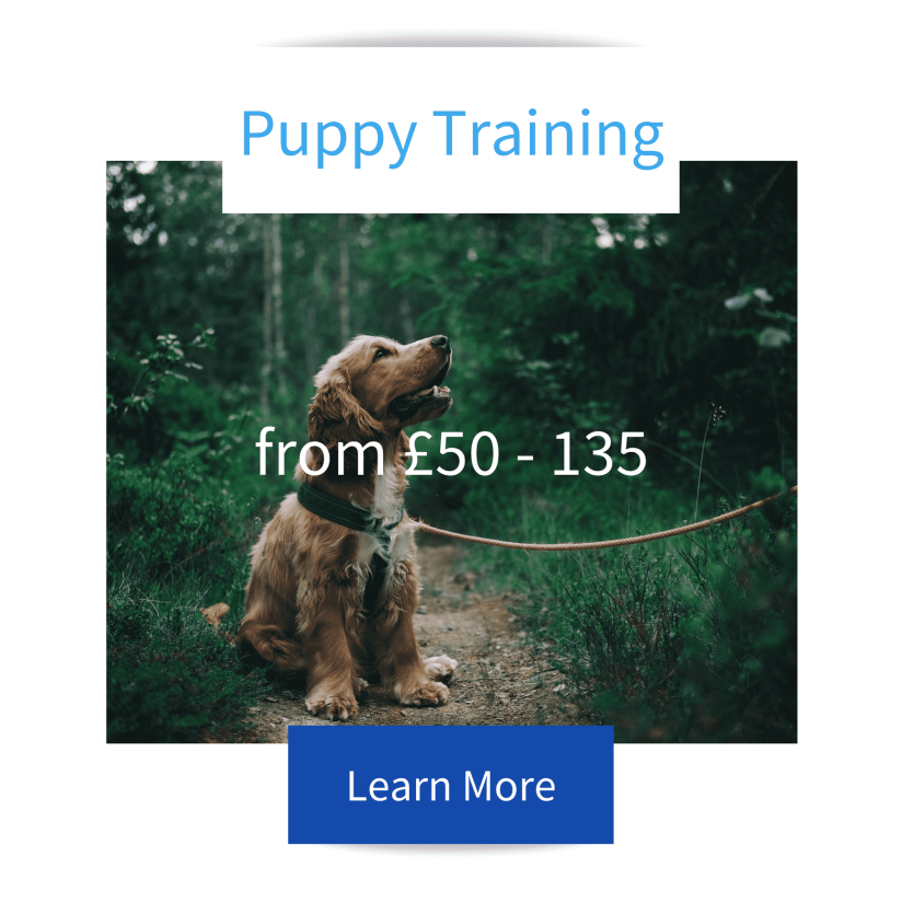 Puppy Training Tile with Cocker Spaniel Puppy sitting in the woods on a harness and lead advertising Jo Hinds Dog Trainer and Behaviourist services with prices and learn more button.